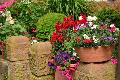 летни цветя
